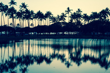 ヤシの木と夕焼けの空,水面の反射,ハワイ,