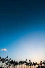 ヤシの木と夕焼けの空,ハワイ,