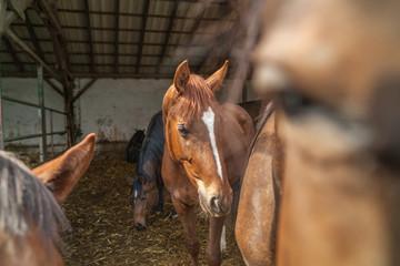 Pferde im Laufstall in der Sonne