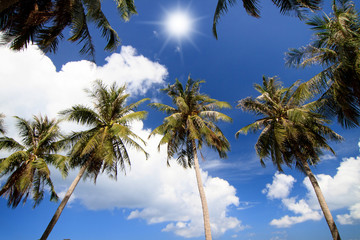 Coconut tree under blue sky, in sunny day