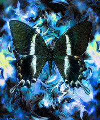 Butterfly and color abstract background with spots. computer collage, blue, black and white color
