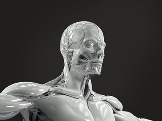 Human anatomy showing low three quarter view of face and torso in porcelain finish on dark background.