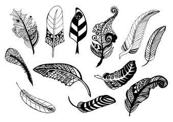 Hand drawn whimsical feather collection.