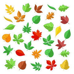 Wall Mural - Autumn and summer leaves in flat style. Nature leaves, summer plant, autumn leaves, natural leaf. Vector illustration icons set