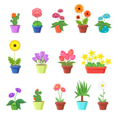 Wall Mural - Cute spring flowers in pots vector. Flower spring, flower pot, floral plant, nature flower blossom, chamomile tulip sunflower illustration