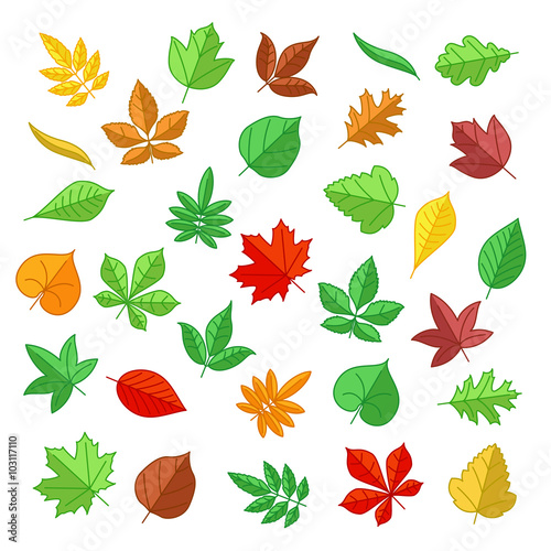 Wall mural Autumn and summer leaves in flat style. Nature leaves, summer plant, autumn leaves, natural leaf. Vector illustration icons set