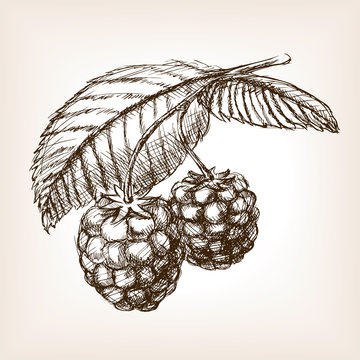 Raspberry hand drawn sketch style vector