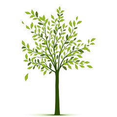 Green tree with leaves on white background