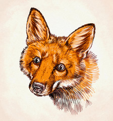 engrave ink draw fox illustration