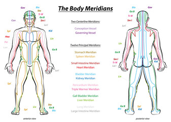 Meridian System Chart - Male body with principal and centerline acupuncture meridians - anterior and posterior view - Traditional Chinese Medicine - Isolated vector illustration on white background.