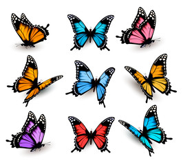 Fototapete - Big collection of colorful butterflies. Vector