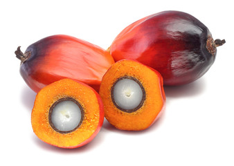 Oil palm fruit on white background