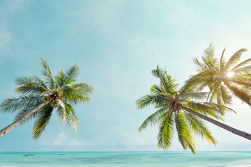 Wall Mural - Palm tree on tropical coast with  in summer beach. vintage color tone stylized