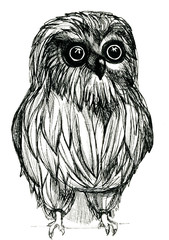 Owl pen-and-ink drawing
