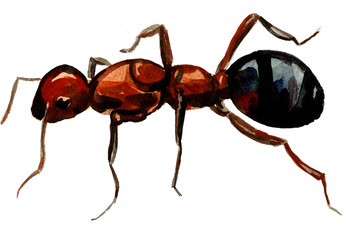 Pleasing ant wash drawing