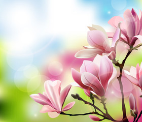 Spring background with blossom brunch of Magnolia with blurry effect. Template Vector.