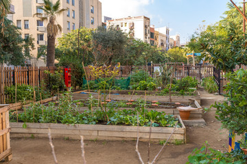 Gardening in the mid of the historical old town in the metropolis Barcelona. Salad and vegetables in home growing in the small spaces of the city is very fashionable