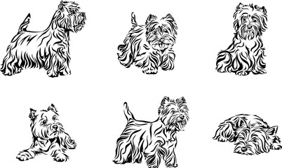 Dog, terrier, portrait, west-highland-white-terrier, white, black, vector, graphics, drawing, picture, stylization, image, isolated, illustration