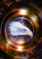 eagle in cosmic space and light circle. original painting collage.  Animal concept, Profile portrait. Sepia and light Golden color.