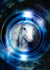 Horse in space, in circle light. Mirror on the planet Earth. Animal concept, Winter effect and blue color.