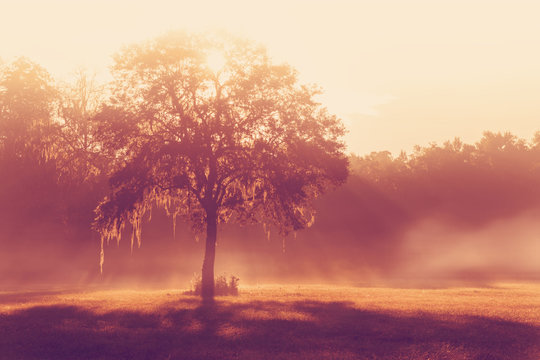 Silhouette of a lone tree in a field early at sunrise or sunset with sun beams mist and fog with a retro vintage filter to feel inspirational rural peaceful meditative