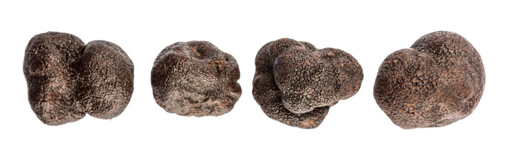Black truffle mushroom over white background