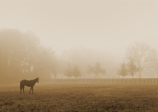 Lonely solitary horse equine in an open grassy field meadow pasture in the fog looking empty dismal depressing desolate bleak stark grim dramatic moody drab dim dull