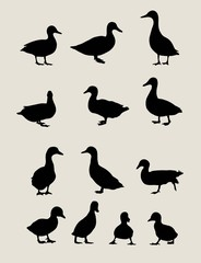 Duck Silhouettes, art vector design