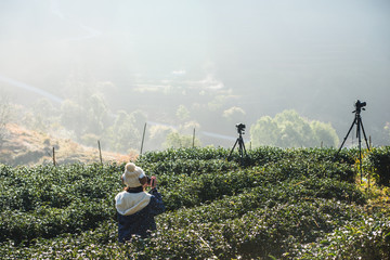 Tourist with tea field and the morning mist, at Doi Angkhang in