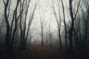 dark spooky forest with man silhouette