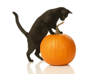 Black Cat Jumps on a Pumpkin