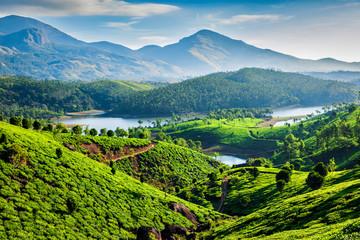 Foto auf Acrylglas Blau Tea plantations and river in hills. Kerala, India