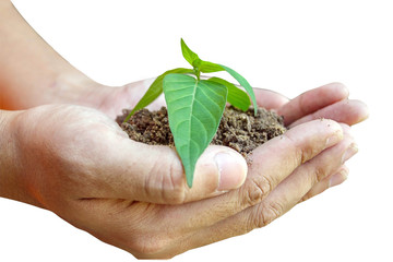 Hand of man holding plant and tree on nature and sky background