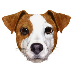 Portrait of Jack Russell. Hand-drawn illustration, digitally colored.