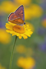 Closeup butterfly on flower - perfect macro view