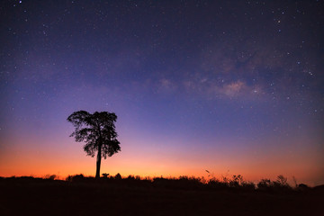 Before sunrise milkyway and silhouette of tree. Long exposure ph