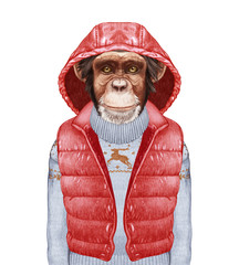 Animals as a human. Portrait of Monkey in down vest and sweater. Hand-drawn illustration, digitally colored.