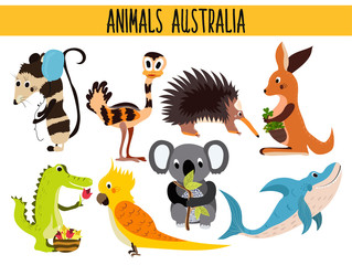 Set of Cute cartoon Animals and birds of Australia and its ostrovov. Kangaroo, possum, numbat, the Koala bear, EMU, parrot, alligator, echidna, and a predatory shark . Vector