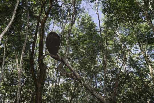 Cuba, Caribbean, Forest in Cienaga de Zapata