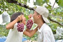 9月の「原鶴温泉・花水木」は、鵜飼とフルーツ狩りのプランが大好評!