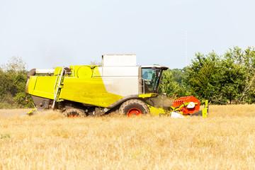 Mähdrescher erntet Getreide / harvester reap on field