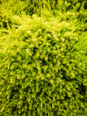 Greens Forever