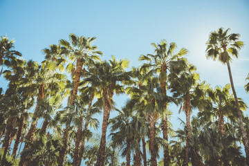 Palm Springs Movie Colony Palm Trees. Vintage style image meant to portray the re-birth of Palm Springs and it's modernism and style.