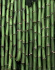 Printed roller blinds Zen green bamboo