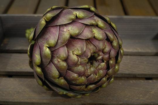 Fresh artichoke green-purple flower head, on wooden background