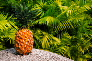 Pineapple on the stone  with a green tropical  background