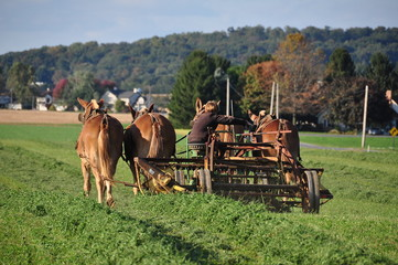 Lancaster County, Pennslvania - October 15, 2015:  Amish youth cutting grass seated on a thresher pulled by four donkeys
