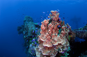 Coral reef with tropical fishes.