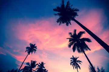 Palm trees silhouettes on the sunset sky background.