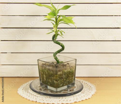 Bambus Im Topf Auf Dem Tisch Auf Der Seviette Stock Photo And